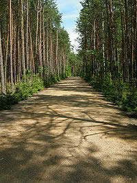 Lessons from Sobibor